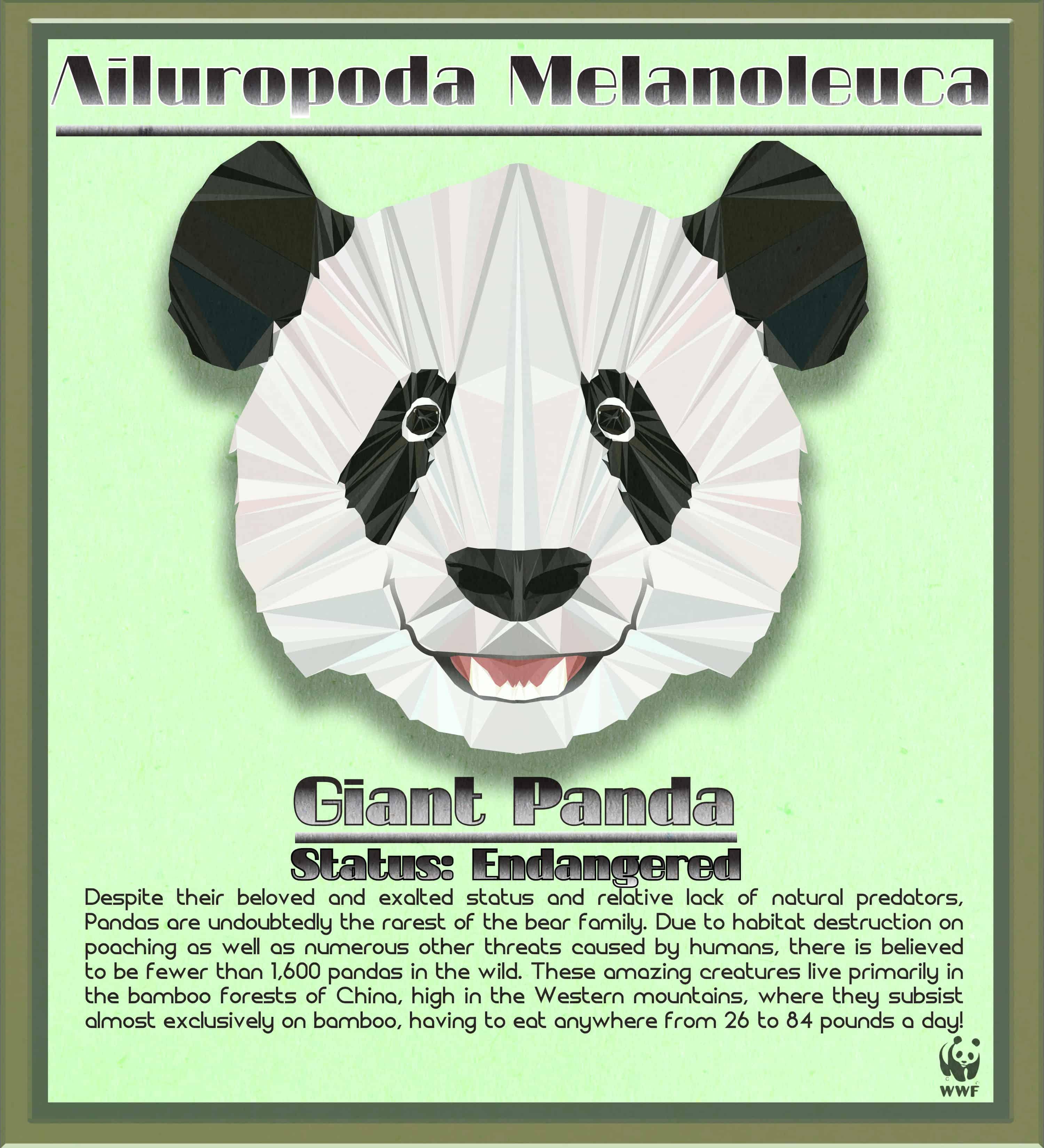 Panda Bear Final
